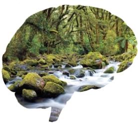 Brain is a Rainforest
